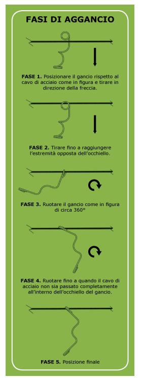 Lore-fasi_verde_crop